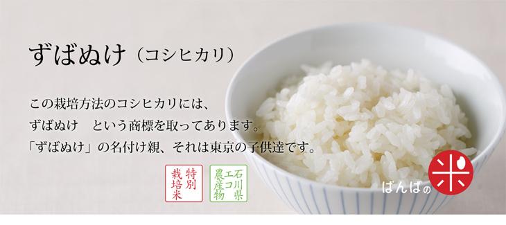 ずばぬけ(コシヒカリ)