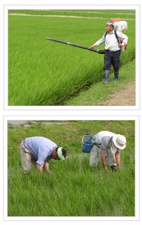 夏の農作業